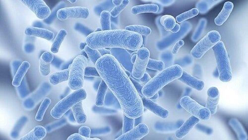 Амоксиклав и бактерии