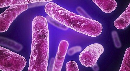 бактерии при цистите