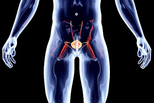доксициклин и простата