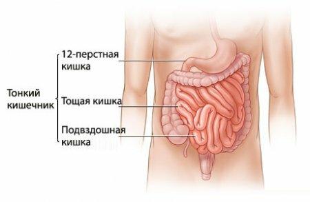 трузи и кишечник