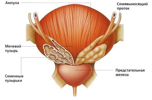 Электростимуляция и простата