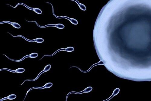 проблемы с репродукцией