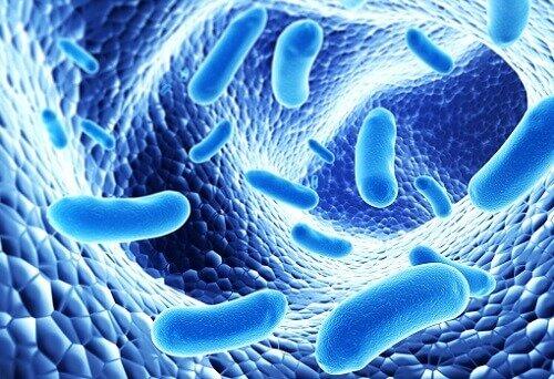инфекция и лимфоузел