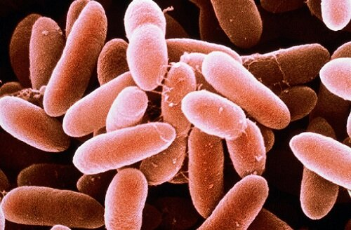 бактерия в уретре