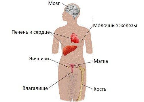 эстроген и климакс