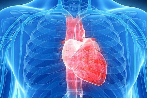 Сиалис и сердце