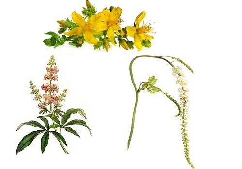 Целебные травы при климаксе