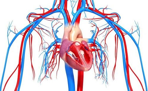 Сердечно-сосудистые патологии при климаксе