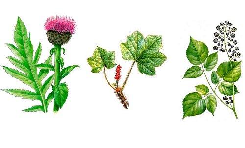 Травы для симптоматического лечения