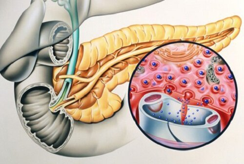 Выработка инсулина