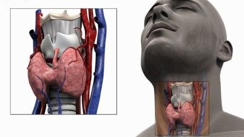 щитовидная железа у мужчины