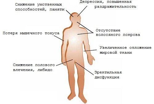 тестостерон у мужчин